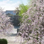 「そうだ 京都、行こう。」二条城ポスタービジュアル(イメージ)