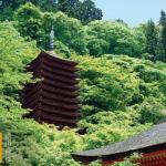 青もみじに包まれる、世界唯一の「木造十三重塔」