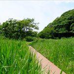 小網代の森 風景写真