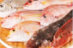 珍しい魚種